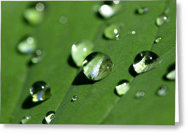 Dew Greeting Cards - Waterdrops Greeting Card by Melanie Viola