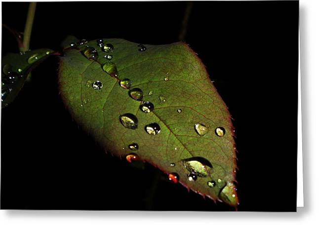 Watered-leaf Greeting Card by Rosvin Des Bouillons