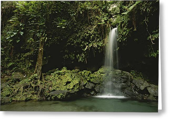 Waterfall And Emerald Pool In A Lush Greeting Card by Tim Laman