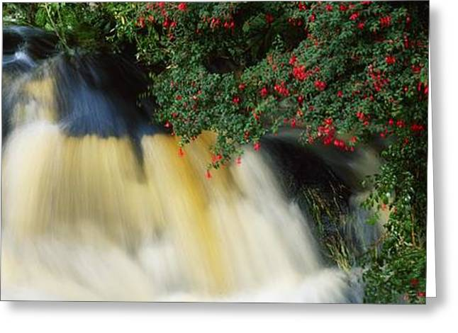 Beautiful Creek Greeting Cards - Waterfall And Fuschia, Ireland Greeting Card by The Irish Image Collection