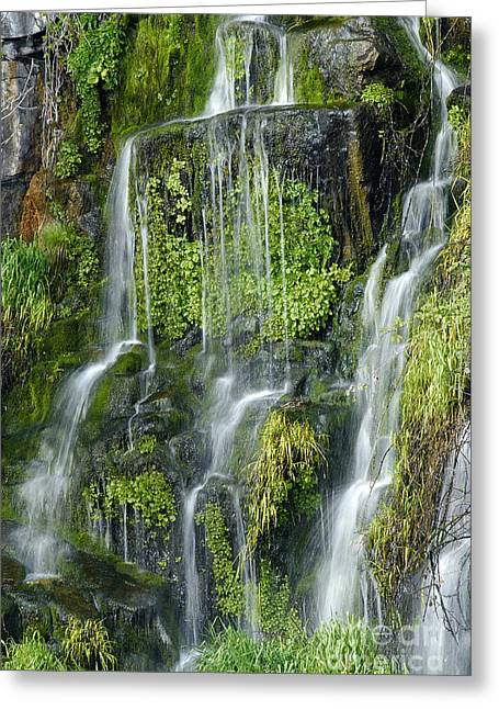 Watercress Greeting Cards - Waterfall at Columbia River Washington Greeting Card by Ted J Clutter and Photo Researchers