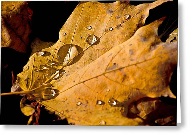 Fallen Leaf On Water Greeting Cards - Waterfall Greeting Card by Burney Lieberman