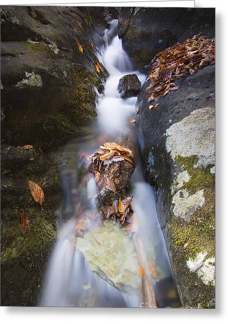 Shenandoah National Park Greeting Cards - Waterfall in Shenandoah National Park Greeting Card by Dustin K Ryan