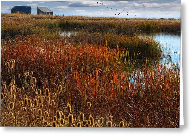 Farmington Greeting Cards - Waterfowl Refuge Greeting Card by Utah Images