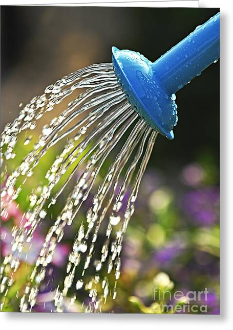 Watering Can Greeting Cards - Watering flowers Greeting Card by Elena Elisseeva