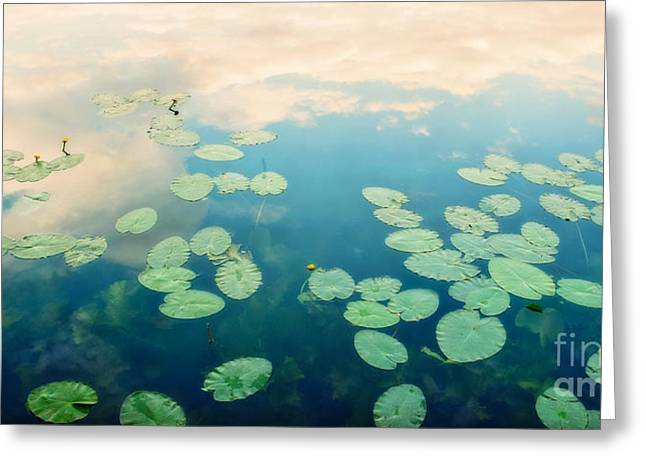 Blue Green Water Greeting Cards - Waterlilies Home Greeting Card by Priska Wettstein
