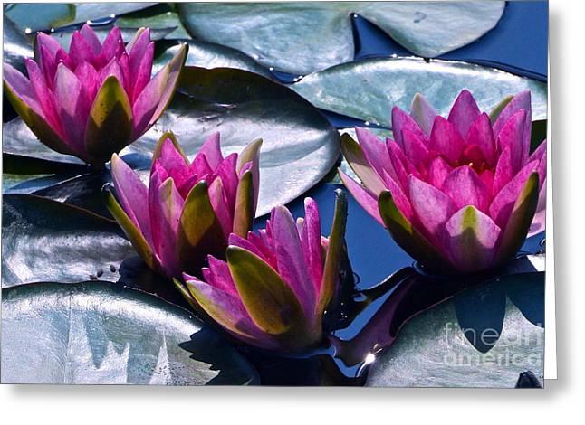 Waterlilies In Bright Sunlight Greeting Card by Byron Varvarigos