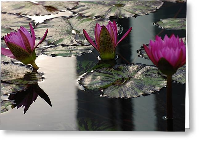 Water Lilly Greeting Cards - WaterLily Dream Greeting Card by Trice Jacobs