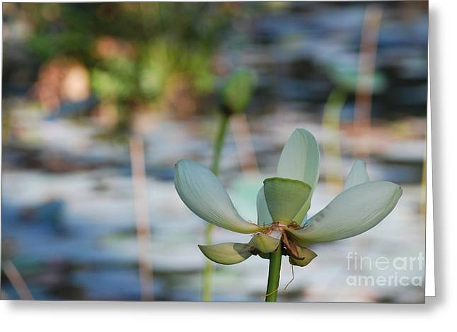 Water Lilly Greeting Cards - Waterlily Wash Horizontal Greeting Card by Heather Kirk