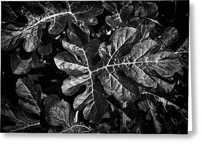 Watermelon Leaves Greeting Card by Tom Bell