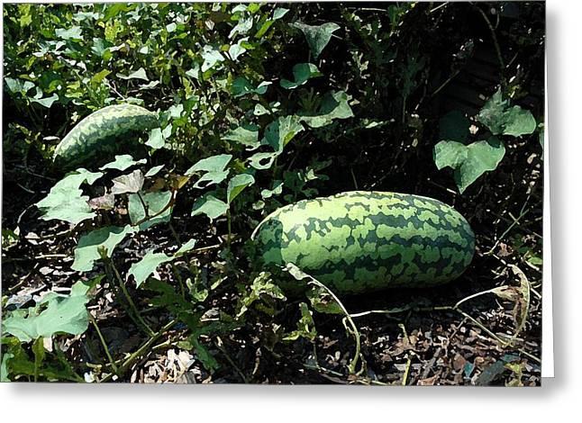 Watermelon Digital Art Greeting Cards - Watermelons Greeting Card by Michael Thomas