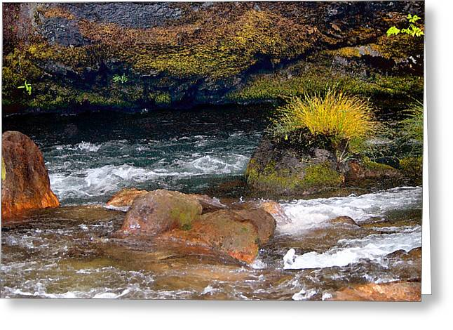 Misery Greeting Cards - Waters Edge Greeting Card by Betty LaRue