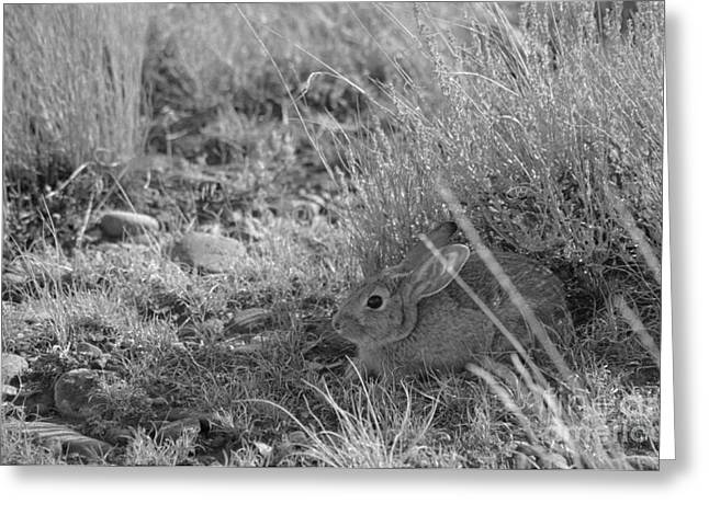 Hare Greeting Cards - Watership Down Greeting Card by Janeen Wassink Searles