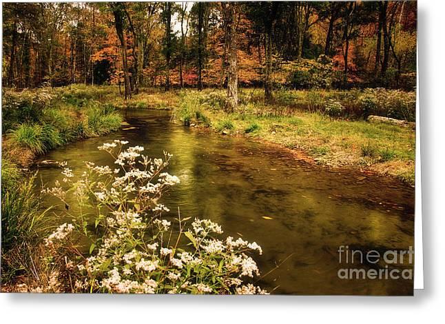Tamyra Ayles Greeting Cards - Waterside Flowers at Beavers Bend Greeting Card by Tamyra Ayles
