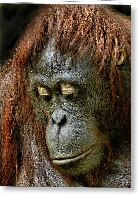 Orang-utans Greeting Cards - Wattana Greeting Card by Julie L Hoddinott