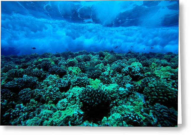 Reef Photos Greeting Cards - Wave Breaking Greeting Card by Dave Fleetham - Printscapes