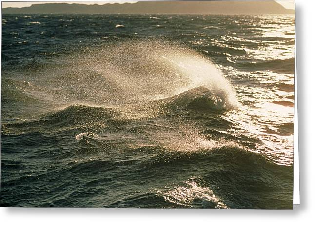 Reflecting Water Greeting Cards - Waves Greeting Card by Peter Scoones
