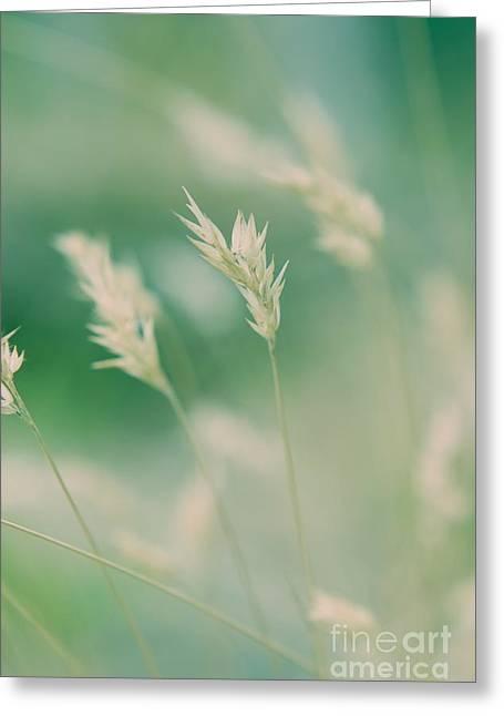 Wayside Greeting Cards - Wayside grass - colour Greeting Card by Hideaki Sakurai