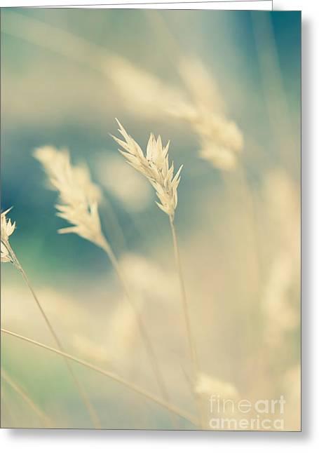 Wayside Greeting Cards - Wayside grass - light Greeting Card by Hideaki Sakurai