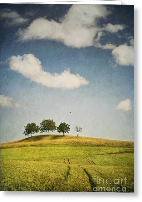Meadow Photographs Greeting Cards - We Are 4 Greeting Card by Priska Wettstein