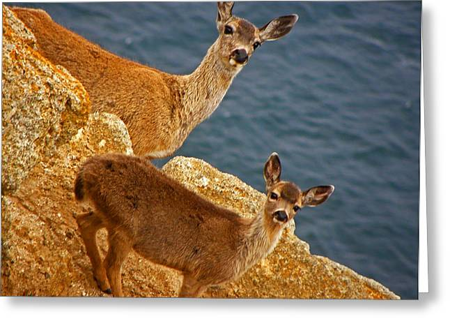 California Ocean Photography Greeting Cards - We Are All Ears Greeting Card by Elizabeth Hoskinson