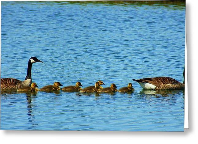 Geese Family Greeting Cards - We are Family Greeting Card by Monica Lewis
