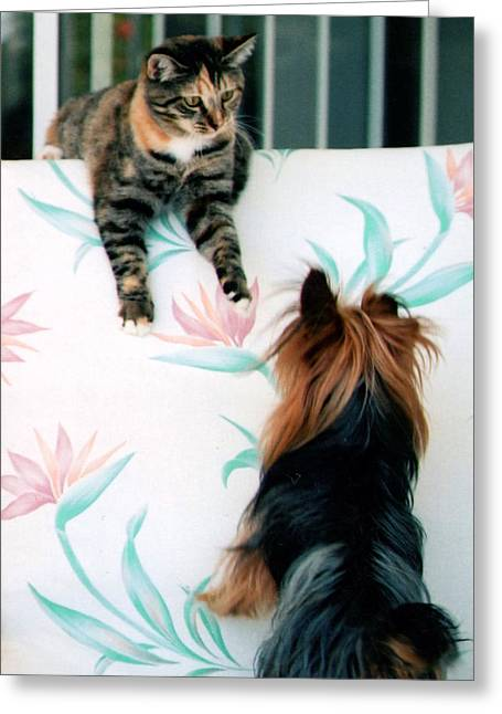 Dog And Cat Fight Greeting Cards - We Can Talk This Over... Greeting Card by Tanya Tanski