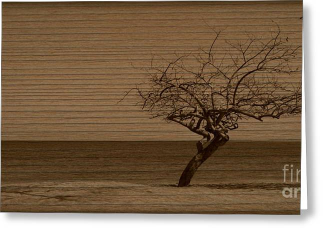 Ocean Art Photgraphy Greeting Cards - Weatherd Beach Tree Greeting Card by Perry Webster