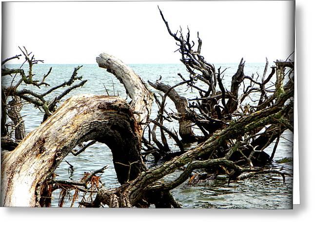 Cedar Key Greeting Cards - Weathered Beach Trees III Greeting Card by Sheri McLeroy