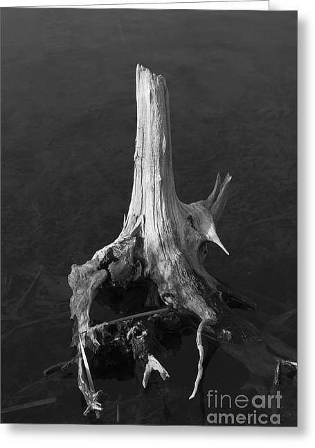 Tree Roots Photographs Greeting Cards - Weathered Stump Greeting Card by David Gordon