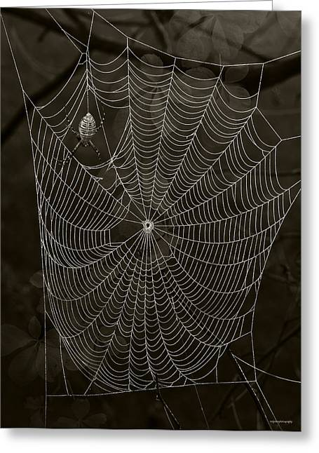 Arachnids Greeting Cards - Web Master Greeting Card by Ron Jones