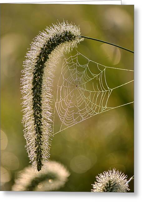 Webbed Tail Greeting Card by JD Grimes