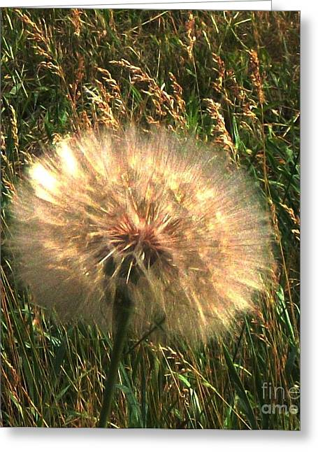Dandilion Greeting Cards - Weeds Have Beauty Greeting Card by Marsha Heiken