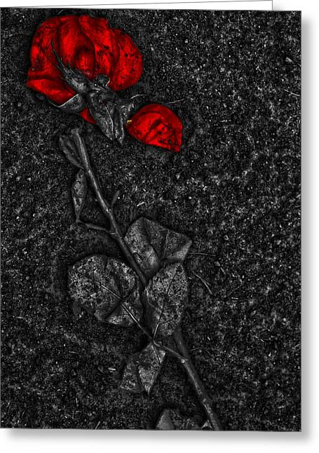Street Photographer Photographs Greeting Cards - Weep Of A Rose  Greeting Card by Jerry Cordeiro