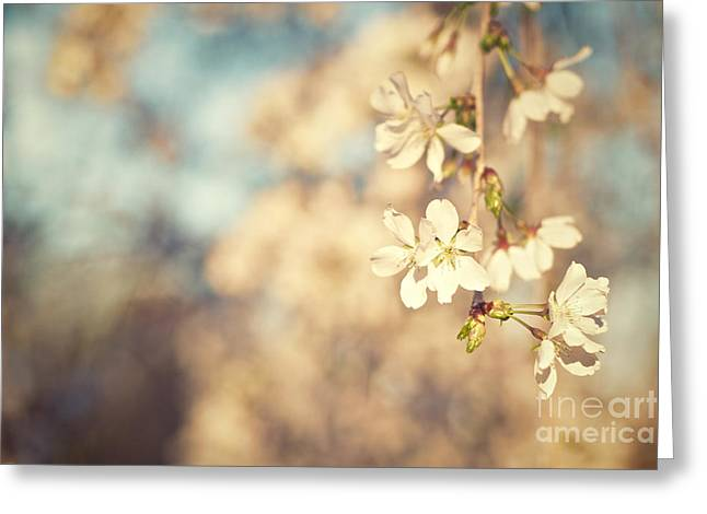 Sunlight On Flowers Greeting Cards - Weeping Cherry Blossoms Greeting Card by Melissa Ross