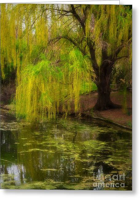 Calm Waters Greeting Cards - Weeping Pond Greeting Card by Fred Lassmann