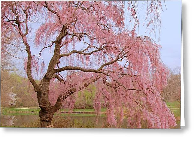 Easter Flowers Greeting Cards - Weeping Spring- Holmdel Park Greeting Card by Angie Tirado