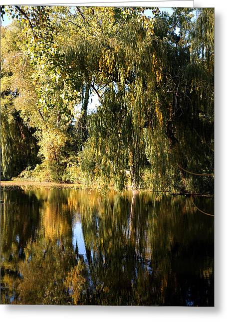 Nature Center Pond Greeting Cards - Weeping Willow in Michigan Greeting Card by LeeAnn McLaneGoetz McLaneGoetzStudioLLCcom
