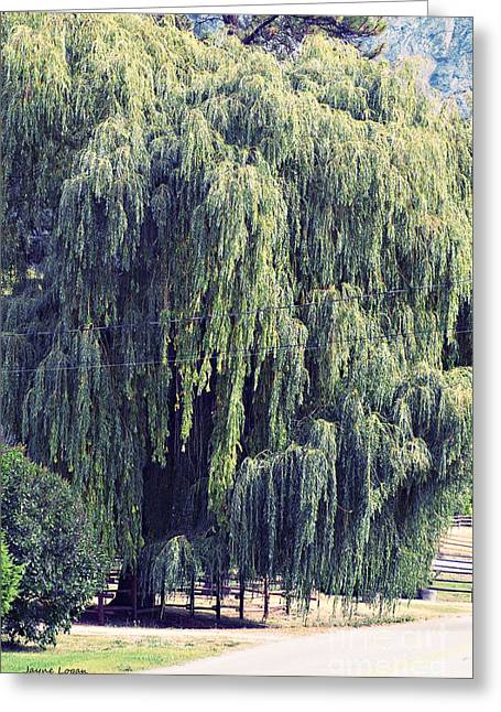 Artography Greeting Cards - Weeping Willow Tree Greeting Card by Jayne Logan Intveld