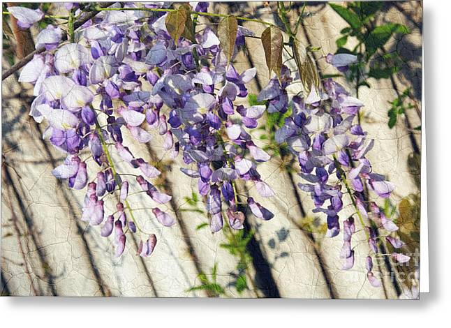 Wisteria Leaves Greeting Cards - Weeping Wisteria Greeting Card by Andee Design