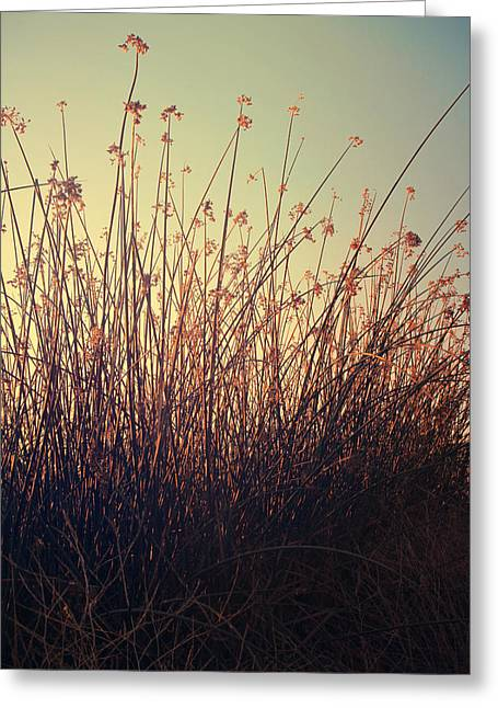 Cattails Greeting Cards - Weightless Greeting Card by Laurie Search