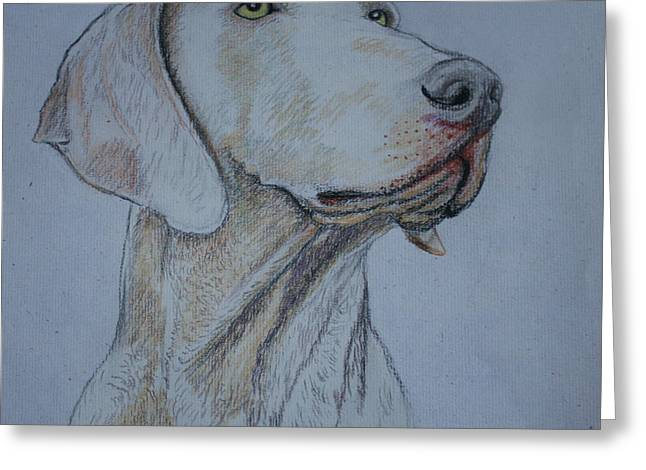 Canines Art Pastels Greeting Cards - Weimaraner Dog Greeting Card by Jose Valeriano