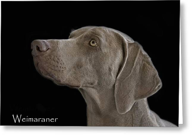 Weimaraners Greeting Cards - Weimaraner Greeting Card by Larry Linton