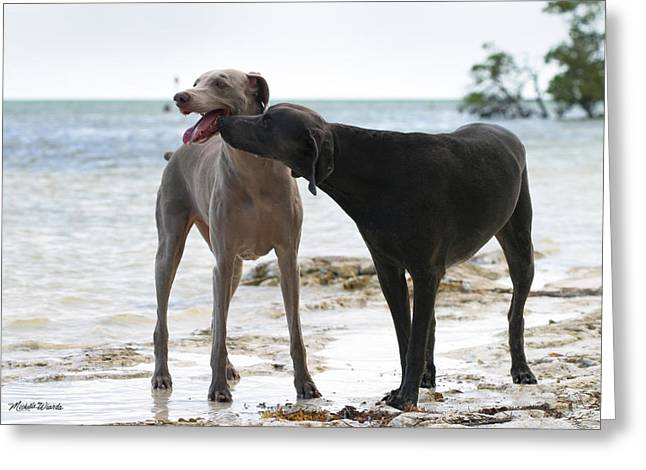 Weimaraners Greeting Cards - Weimaraners Scentual Visit Greeting Card by Michelle Wiarda