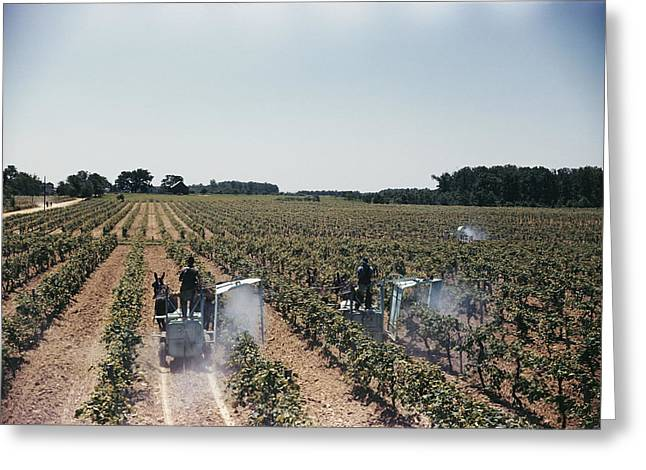Welch Greeting Cards - Welchs Grape Vineyard Covers 250 Acres Greeting Card by Willard Culver