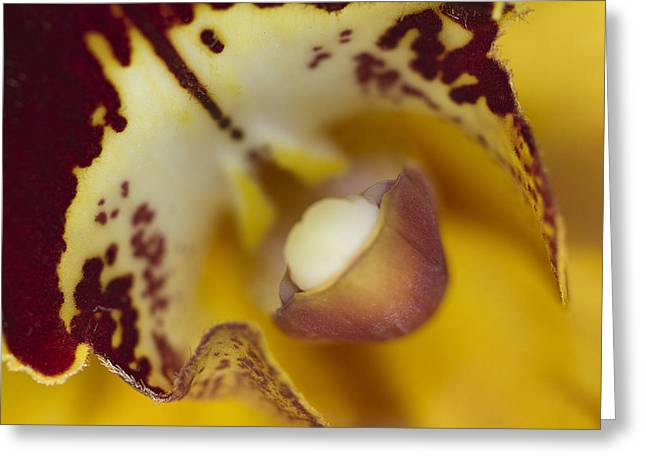 Orchid Greeting Cards - Welcome Greeting Card by Rebecca Cozart