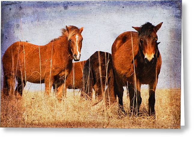 Old Western Photos Greeting Cards - Welcoming Committee Greeting Card by Joye Ardyn Durham