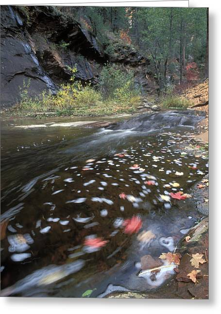 West Fork Greeting Cards - West Fork Oak Creek And Fall Color Greeting Card by Rich Reid