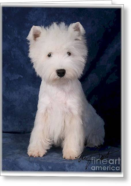 West Highland White Terrier Pup Greeting Card by Maxine Bochnia