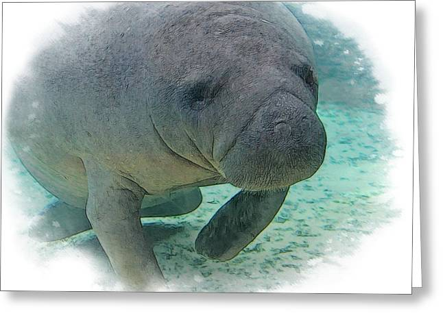 Wildlife Photos Greeting Cards - West Indian Manatee Greeting Card by Larry Linton